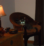 cat in chair with glowing eyes
